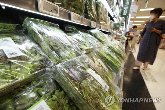 """상추 도매가격 1주일새 30% 급락…""""다음주 소매가에 반영될 듯"""""""